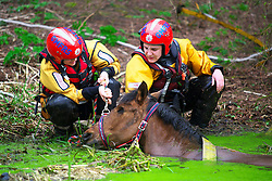 LNP HIGHLIGHTS OF THE WEEK 04/04/14 © Licensed to London News Pictures. 31/03/2014. Radcliffe, UK Greater Manchester Fire and Rescue service rescue a horse from the River Irwell in Radcliffe. 21 year old Ruby, who only has one eye, lost her footing and fell in on Monday (31st March 2014) and was unable to get out of the water. Her owner called 999 and firefighters from Broughton, Whitefield and Bury stations were called to help out. After a rest, Ruby was able to stand and made her way back to her stable. Photo credit : GMFRS/LNP