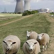 Nederland, Hedwigepolder, gemeente Hulst  19 juni 2010 20100619    ..Belgische kerncentrale Doel, gezien vanaf de scheldedijk van de Hertogin Hedwigepolder in Zeeuws-Vlaanderen, de Nederlandse polder die ontpoldert zou moeten worden als de Westerschelde uitgediept word. Op de voorgrond schapen, In de achtergrond de Belgische Kerncentrale van Doel. kernenergie atoomcentrale Kernreactor Kernreactoren kerncentrales schapen schaap grazende Nuclear power plant vee Atoomstroom  ruimtelijke, ruimtelijke omgeving, ruimtelijke ordening, rust, rustgevend, rustiek, rustieke, rustieke omgeving, rustig, rustige, Samen werken met water, schaap, schapen, schepping, schone lucht, schoon, schoonheid, sea level, sealevel, sheep, space, sprankelend, sprankelende, stijging zeespiegel, stil, stilleven, stilte, stock, stockbeeld, streek, sustainable, tegen, terrein, typerend, typical dutch landscape, typisch hollands, typisch hollands landschap, typische, uitgestrektheid, uitstoot, uitstooten, uitzicht, uniek, unieke, veiligheid, vergezicht, vergezichten, verte, vervuiling, vlaams, vlaamse, Vlaanderen, vrij, vrijheid weer, water level, waterbeheer, Waterbeheerplan, waterhuishouding, waterkering, waterkeringen, Waterkeringen, waterlevel, watermanagement, waterniveau, waterpeil, waterplan, waterproblematiek, waterstaatkundige, waterstand, watersysteem, waterveiligheid, waterveiligheid en gebiedsontwikkeling, waterwerken, wei, weide, weidegang, weiland, weiland. Landscape, wijdheid, wijds, wijdsheid, wit, witte, wolk, wolken, wolkenpartij, zeeland, Zeeuws, zeeuws vlaanderen, zeeuws-vlaanderen, Zeeuwse, zo vrij als een vogel, ZVL, .. Foto: David Rozing