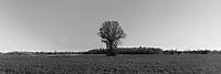 http://Duncan.co/lone-tree-in-a-field