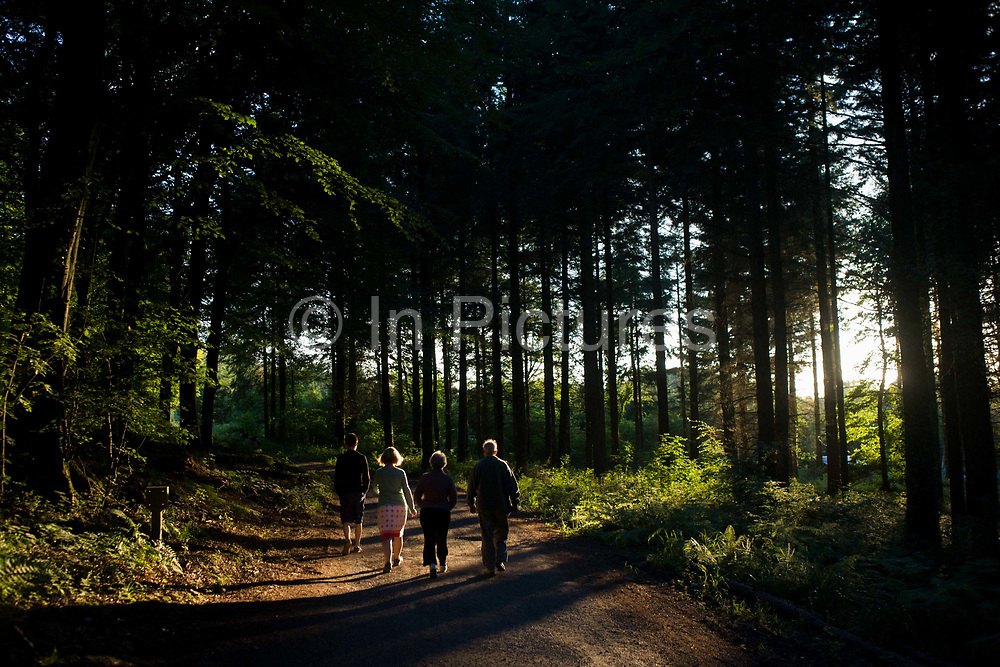 A family walk through late evening summer sunshine in woodland in North Somerset, UK. Long shadows stretch across the path and the family of three generations make their way towards the lighter area of the forest. The British summer is what the English miss most when away and we almost smell the scents of the woods, the beech and pine trees plus some ferns and soil of the northern hemisphere. The last light finds the trees in the otherwise dense and dark woods.