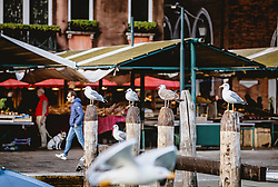 THEMENBILD - Möwen sitzen auf Holzpfahle, aufgenommen am 05. Oktober 2019 in Venedig, Italien // Seagulls sit on wooden posts, in Venice, Italy on 2019/10/05. EXPA Pictures © 2019, PhotoCredit: EXPA/Stefanie Oberhauser