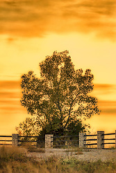 An Autumn Tree on the edge of a scenic cliff soaks up the warmth of a sunset beyond the fence line at Klondike Park