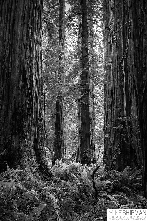 June photography trip with Timberline High School photography students, Trish Thorpe teacher