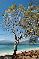 Indonesie. Lombok. Archipel des Gili. Île de Gili Air. // Indonesia. Lombok. Gili archipelago. Gili Air Island