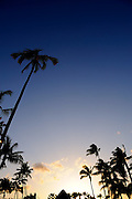 Coconut palms in silhouette at sunset. Kona, Big Island, Hawaii RIGHTS MANAGED LICENSE AVAILABLE FROM www.PhotoLibrary.com