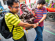 07 SEPTEMBER 2014 - BANGKOK, THAILAND: Men carry a statue of Ganesh to a waiting truck during the Ganesh Festival at Central World in Bangkok. Ganesh Chaturthi, also known as Vinayaka Chaturthi, is a Hindu festival dedicated to Lord Ganesh. It is a 10-day festival marking the birthday of Ganesh, who is widely worshiped for his auspicious beginnings. Ganesh is the patron of arts and sciences, the deity of intellect and wisdom -- identified by his elephant head. The holiday is celebrated for 10 days, in 2014, most Hindu temples will submerge their Ganesh shrines and deities on September 7.     PHOTO BY JACK KURTZ