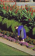 Amish woman works in home garden of flowers and produce.