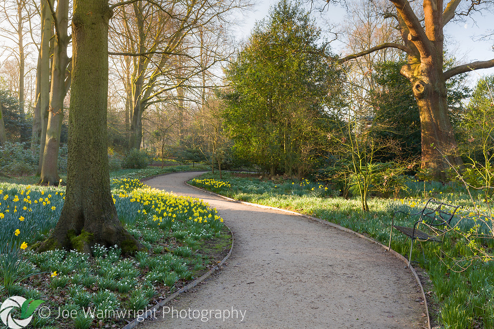 The Winter Garden at Dunham Massey, Cheshire, photographed in February