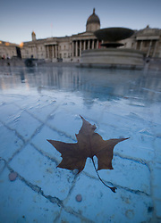 © Licensed to London News Pictures. 25/01/2021. London, UK. A leaf is frozen in ice in the fountains of Trafalgar Square in central London as temperatures remain low. Yesterday saw the first snow of winter in the capital. Photo credit: Peter Macdiarmid/LNP