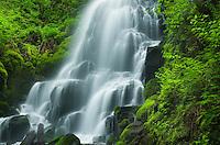 Fairy Falls, Columbia River Gorge National Scenic Area, Oregon