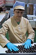 Odintsovo, Russia, 11/12/2006.&#xA;The main production line at Korkunov Chocolates.<br />