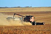 Unloading lentils in grain cart<br /> near Abermathy<br /> Saskatchewan<br /> Canada