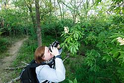 Photographer taking picures of Texas Buckeye Trees (Aesculus glabra var. arguta) in flower, Texas Buckeye Trail, Great Trinity Forest, Dallas, Texas, USA.