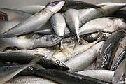 Fresh mackerel on sale fishmongers at Playa Blanca, Lanzarote, Canary Islands, Spain
