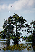 Prek Toal Bird Sanctuary, Tonle Sap Lake, Cambodia