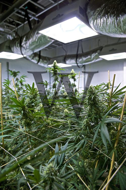 Good Chemistry Marijuana Grow House