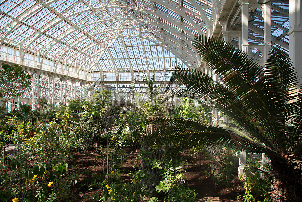 Interior view of the newly refurbished Temperate House at Kew Gardens in London, United Kingdom. The Royal Botanic Gardens, Kew, usually referred to simply as Kew Gardens, are 121 hectares of botanical gardens and glasshouses between Richmond and Kew in southwest London. It is an internationally important botanical research and education institution with 700 staff, receiving around 2 million visitors per year. Its living collections include more than 30,000 different kinds of plants.