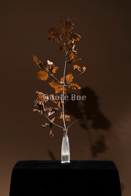 brown oak leaves still life