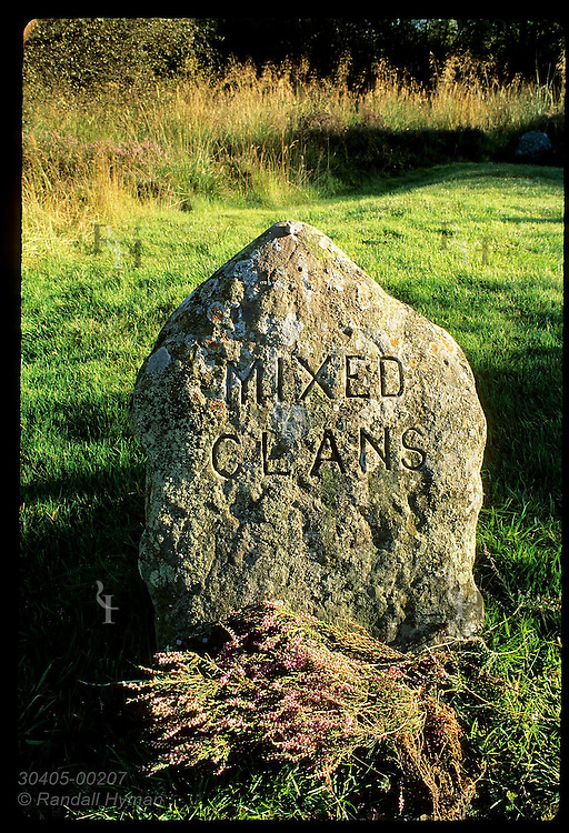 Tombstone and heather bouquet mark mass grave of various clans slain in Jacobite rebellion on Apr 16, 1746; Culloden Moor, Scotland.