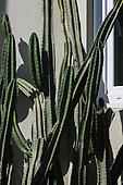 Cactus Bondi