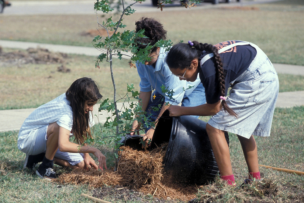 Hispanic and Indian-American junior high girls mulching trees in front of Webb Junior High School in Austin, Texas.<br /> ©Bob Daemmrich/