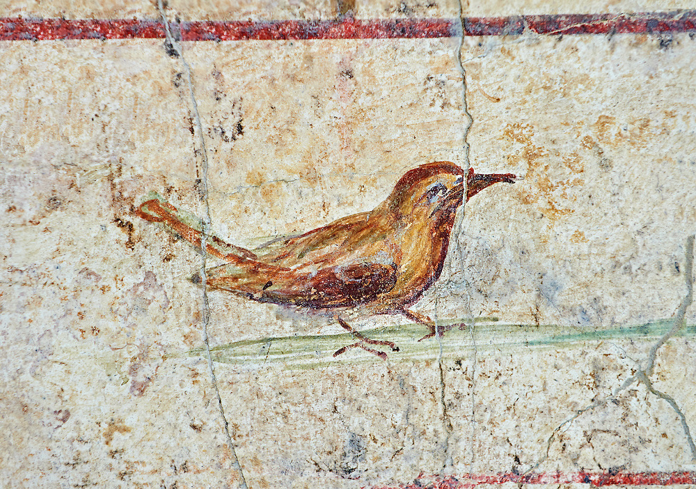 Roman Fresco of a bird from  The Large Columbarium in Villa Doria Panphilj, Rome. A columbarium is usually a type of tomb with walls lined by niches that hold urns containing the ashes of the dead.  Large columbaria were built in Rome between the end of the Republican Era and the Flavio Principality (second half of the first century AD).  Museo Nazionale Romano ( National Roman Museum), Rome, Italy. .<br /> <br /> If you prefer to buy from our ALAMY PHOTO LIBRARY  Collection visit : https://www.alamy.com/portfolio/paul-williams-funkystock/national-roman-museum-rome-fresco.html<br /> <br /> Visit our ROMAN ART & HISTORIC SITES PHOTO COLLECTIONS for more photos to download or buy as wall art prints https://funkystock.photoshelter.com/gallery-collection/The-Romans-Art-Artefacts-Antiquities-Historic-Sites-Pictures-Images/C0000r2uLJJo9_s0