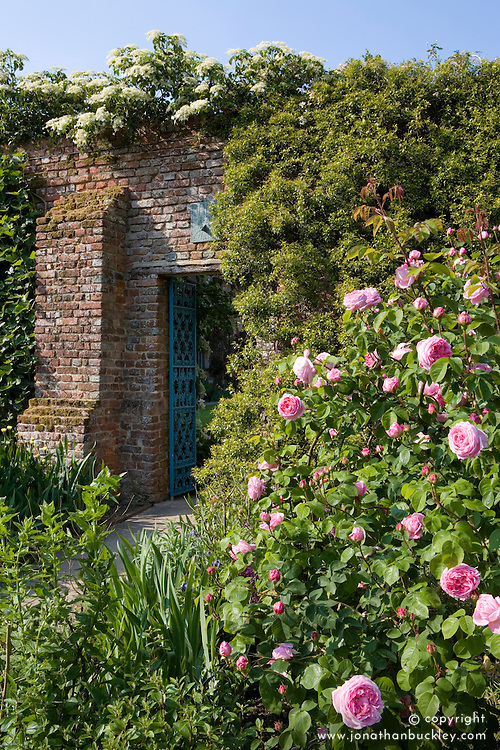 Rosa 'Constance Spry' AGM in the Rose Garden at Sissinghurst Castle