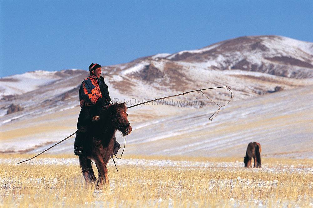 Domestic horses<br /> Being moved to spring grazing grounds<br /> Khustain Nuruu National Reserve<br /> Mongolia<br /> Nomad with lassoo