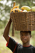 A farm worker carries a basket full of cocoa pods on his head at a farm in the town of Assin Adadientem, roughly 100km west of Ghana's capital Accra on Sat. January 21, 2007.