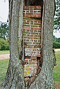 "Bricks wedge a tree cavity. Shirley Plantation, settled in 1613, is the oldest active plantation in Virginia and said to be the oldest family-owned business in North America, dating back to 1638. Shirley Plantation, a National Historic Landmark, is an estate located on the north bank of the James River in Charles City County, Virginia, USA, on State Route 5, a scenic byway which runs between the independent cities of Richmond and Williamsburg (neither is part of a county). Shirley Plantation has been occupied by the Hill family and their descendants since 1738. The mother of Confederate General Robert E. Lee, Anne Hill Carter, was born at Shirley; and in 1793, she married Light Horse Harry Lee in the mansion's parlor. Construction of the present mansion began in 1723 when Elizabeth Hill, great-granddaughter of the first Hill, married John Carter, eldest son of Robert ""King"" Carter. Completed in 1738, the mansion, referred to as the ""Great House,"" is largely in its original state and is owned, operated, and lived in by direct descendants of Edward Hill. The Carter family has lived in the house for ten generations, with the eleventh generation currently occupying the house. It is normally open for tours 9:00 a.m. to 5:00 p.m. daily. The house is the Carter family's only place of residence and therefore, only the bottom floor is open to tours."
