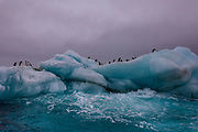Adele penguins sit on an ice berg in the Weddell Sea, Antarctica, on February 4, 2020.