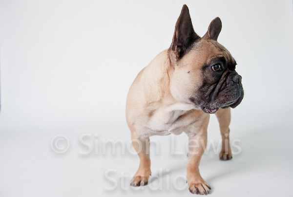 Stock Images - Animals