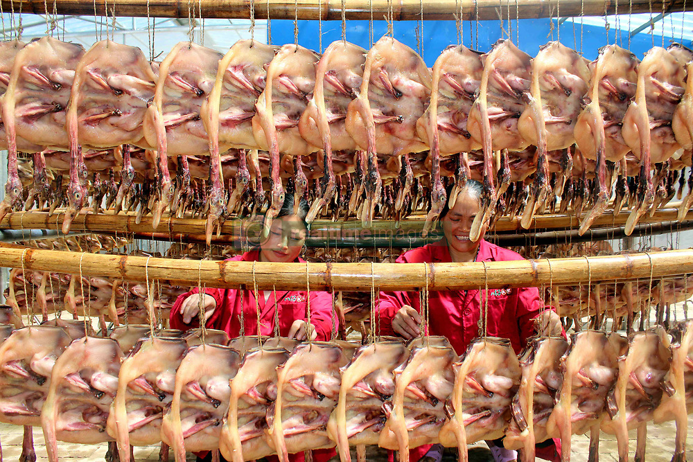 August 29, 2017 - Ji'An, China - People are busy processing pressed salted duck in Suichuan County, Ji'an, east China's Jiangxi Province. Suichuan County can produce eight million pressed salted ducks every year, which are exported to other countries. (Credit Image: © SIPA Asia via ZUMA Wire)