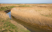 Reed and drainage ditch, Cley next the sea, Norfolk, England