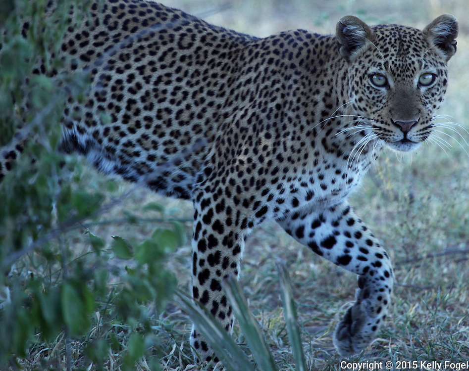 Selous, Tanzania (Feb 2015) african wildlife