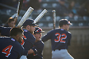 4/27/18 --- CSUF players Sahid Valenzuela, Mitchell Berryhill, Brett Borgogno and Jairus Richards try to time the delivery of UCI pitcher Andre Pallante as he warms up in the bullpen prior to the game between CSU Fullerton and UC Irvine  --- Anteater Ballpark, UC Irvine, Irvine, CA<br /> <br /> Photo by Michel Lim / Sports Shooter Academy