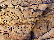 Sandstone rock pattern by Carol Dempsey. Capitol Reef NP, Torrey, Utah, USA.