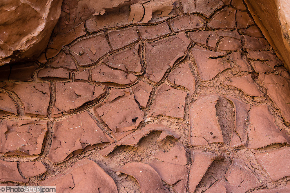 Red mud dries and cracks into a tesselated pattern. Hike Cottonwood Wash Narrows, in Grand Staircase-Escalante National Monument, Utah, USA. The Cottonwood Wash Narrows slice through the Cockscomb, which was uplifted 65 million years ago as part of the East Kaibab Monocline, a major feature of the Colorado Plateau. Directions: On Highway 89, drive 10 miles west of Big Water; between mileposts 17-18, turn north on Cottonwood Canyon Road and drive 25 miles to the Cottonwood Narrows North Trailhead sign (located 12.5 miles southeast of Kodachrome Basin State Park).