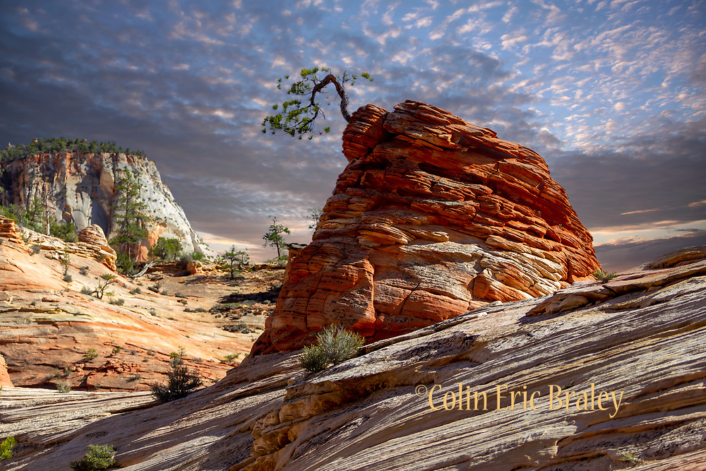 Zion National Park. Colin E Braley