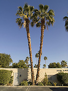 palm trees in a residential neighborhood