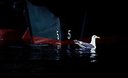 Image detail of a seagull next to a container ship at the Port of Seattle, Washington, Pacific Northwest by Randy Wells