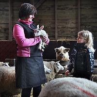Nederland, Zunderdorp , 3 maart 2014<br /> Boerin Angela houdt 1 van de eerste nieuw geboren lammetjes in haar armen op boerderdij de Stadshoeve. Julia (7) wil haar ook graag vasthouden.<br /> Foto:Jean-Pierre Jans