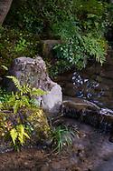 Moss covered rocks and ferns beside a stream in the Kenrokuen Garden, Kanazawa, Ishigawa, Japan