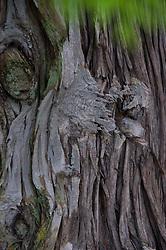 Bark Detail, Stuart Island, San Juan Islands, Washington, US