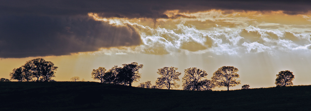 breaking storm illuminating trees on a ridge in marin county california