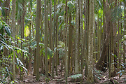 This part of Tamborine Mountain features a lush and narrowly dotted palm tree collection, amongst other trees. During the summer day time, this forest is prone to deafening waves of cricket sounds.