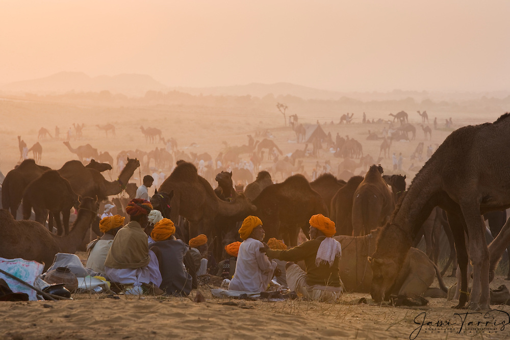 The large gathering of camel dealers during the Pushkar camel fair, Rajasthan, India