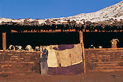 Sheep & goats in Coral<br /> near Ulaanbaatar<br /> Mongolia<br /> winter