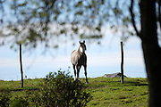 Ecuador, May 26 2010: A horse stands between fence posts at Hacienda San Agustin...Copyright 2010 Peter Horrell