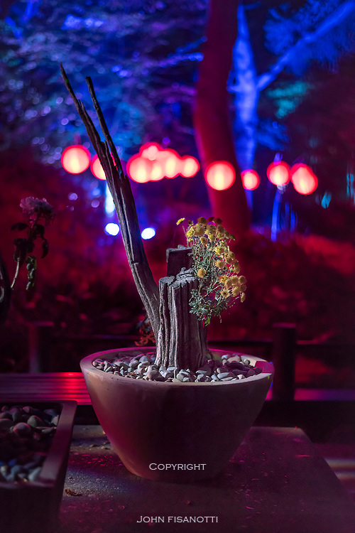 Bonsai Plant at night, Descanso Gardens